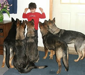 "5 year old Connar with 5 German Shepherd dogs. ""everybody sit"""