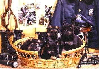 k9-puppies